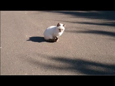 子猫がカラスの攻撃から逃れるwidth=190