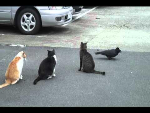 カラスがネコの周りをうろつくwidth=190