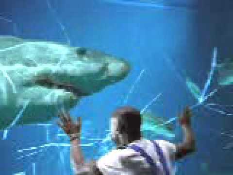 水族館でサメがガラスを突いてwidth=190