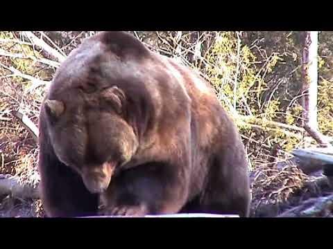 乗車中にクマに襲われるwidth=190