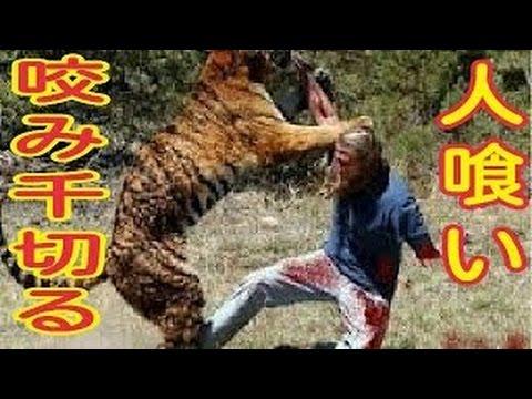 動物が人間を襲う事故width=190