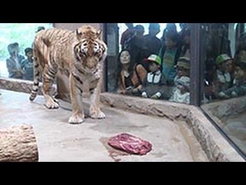 間近で肉食動物の食事を見るwidth=190