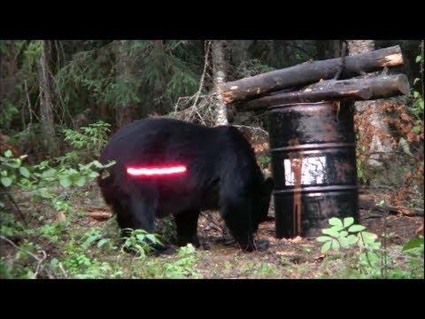 弓矢でクマをハンティングwidth=190