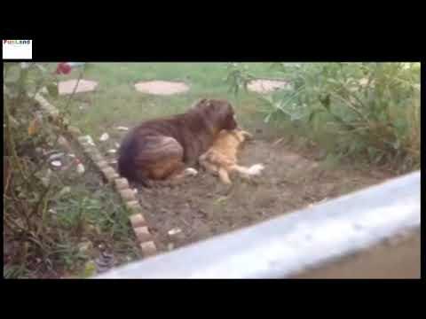 イヌがネコを噛み殺すwidth=190