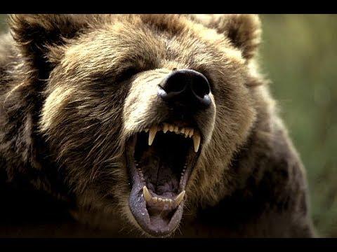 クマを狙い撃ちwidth=190