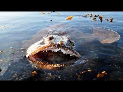 近づくと危険な海の生物width=190