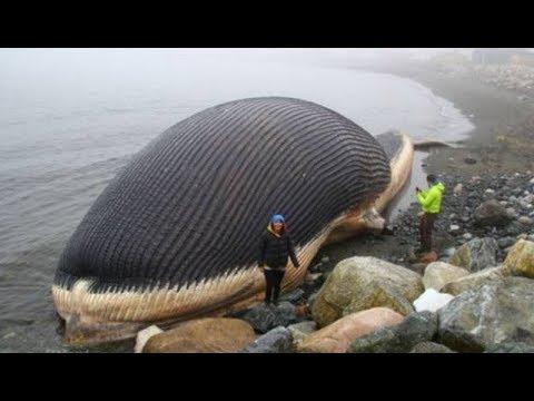 海の中の巨大生物width=190