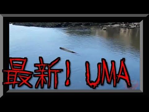 水中から現れたUMAwidth=190
