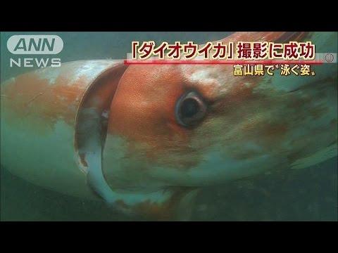 ダイオオイカを鮮明に撮るwidth=190
