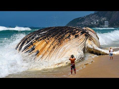 世界の巨大な海の生物width=190