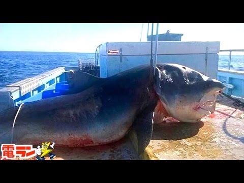 実際に釣った海の巨大生物width=190