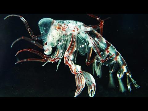 驚くべき海の透明生物width=190