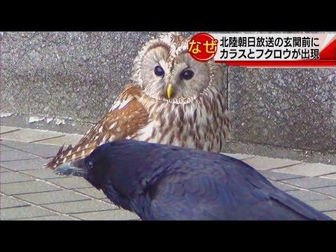 フクロウとカラスが寄り添っているwidth=190