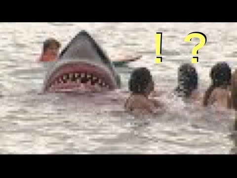 海に巨大サメが出現するドッキリwidth=190