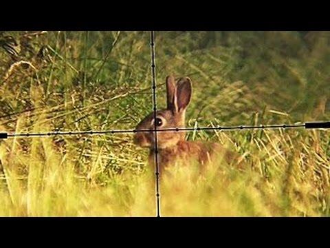 ウサギをエアライフルで狙い撃ちwidth=190