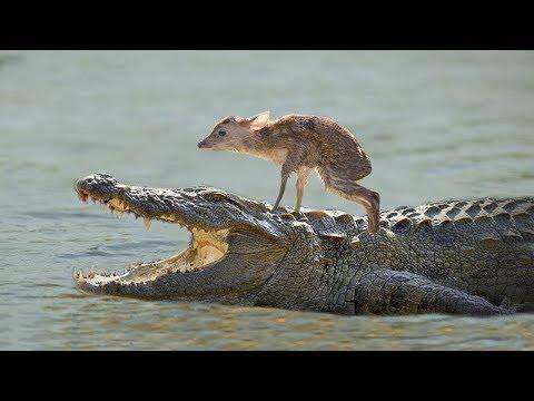動物が他の種類の動物を救う瞬間width=190