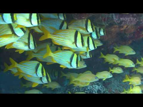 海の生物の癒やしの動画width=190