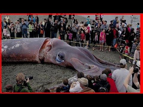 恐ろしい海洋生物width=190