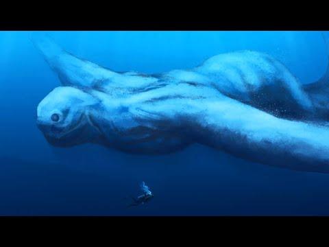グーグルアースで撮った海の中の謎の生物width=190