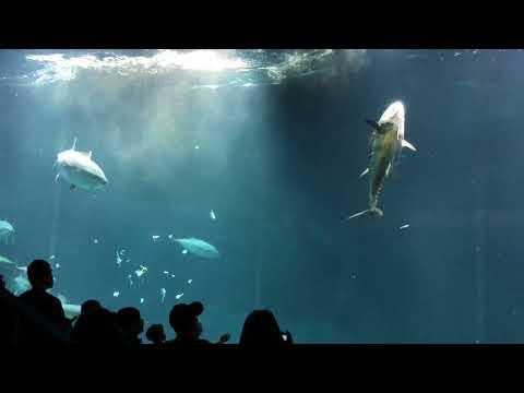水族館のマグロが死亡width=190