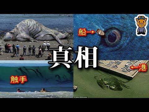 巨大な海に住む生物たちの真相width=190