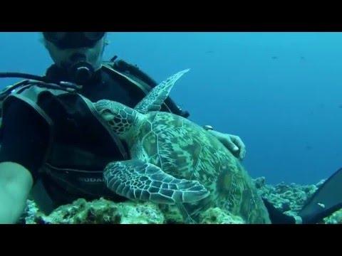 ウミガメとダイバーが抱き合っているwidth=190