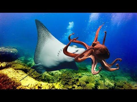 海底のエイとタコの戦いwidth=190